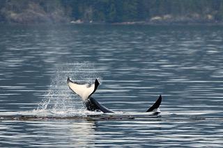 orca der killerwal online sehen